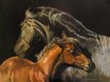 Draft Horse Saddle