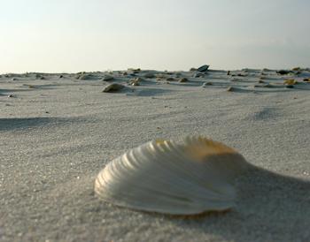 'Shell 2'