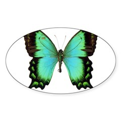 Green Butterfly Rectangle Sticker (Oval 50 pk)