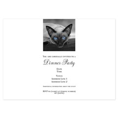 Siamese Cat B&W Photo Art 4.5 x 6.25 Flat Cards