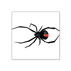 "Redback Spider Square Sticker 3"" x 3"""