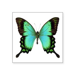 "Green Butterfly Rectangle Square Sticker 3"" x 3"""